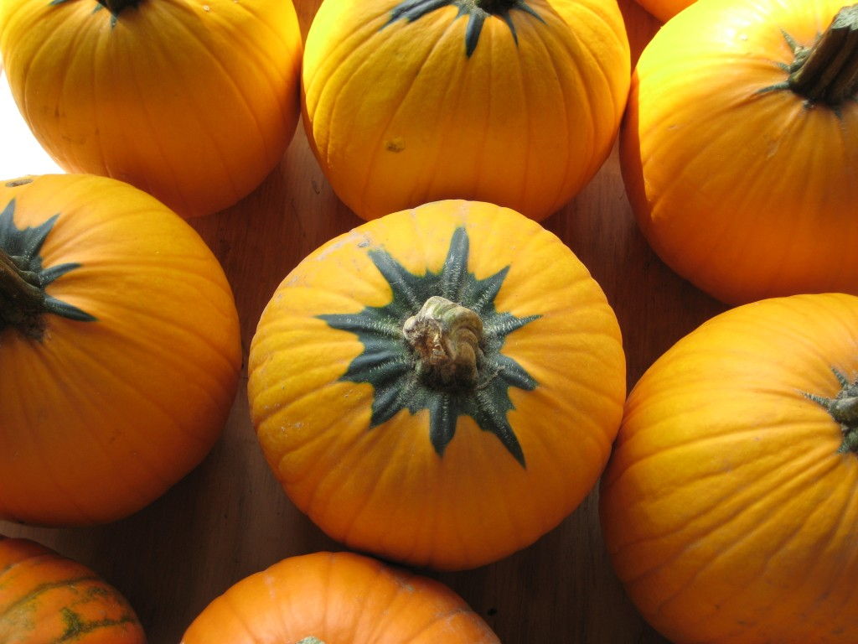 Star Pumpkins