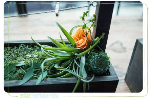 air plant succulent floral decor