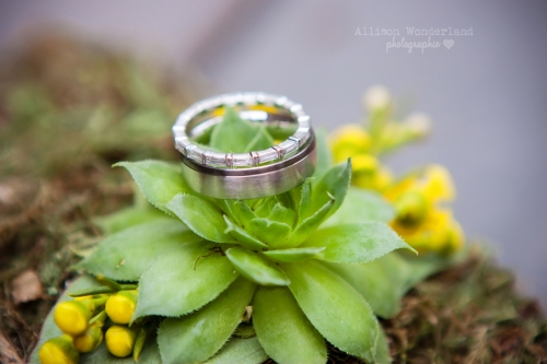 Succulents and Wedding Rings